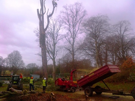 Tree Removal For Elgin Academy